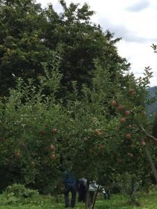 りんごと栗1